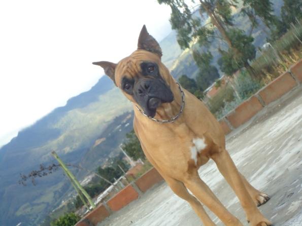 Hooch Boxer